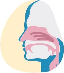 Zīmējumā tuvplānā parādīti elpceļi degunā un mute