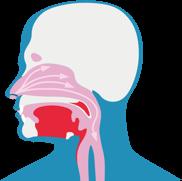 Изображение показывает, как раздражители попадают в дыхательные пути и вызывают влажный кашель